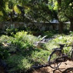 Tanzania / Dar es Salaam / Tree Nursery
